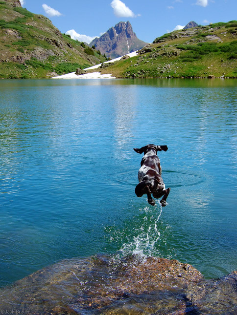 Dog jumps into lake