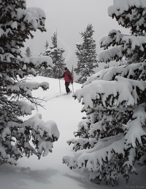 Skinning up through powdery trees