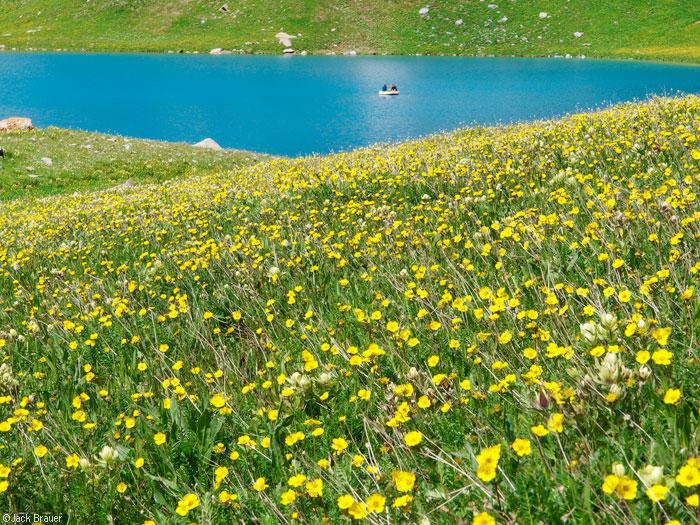 Ice Lake Flowers