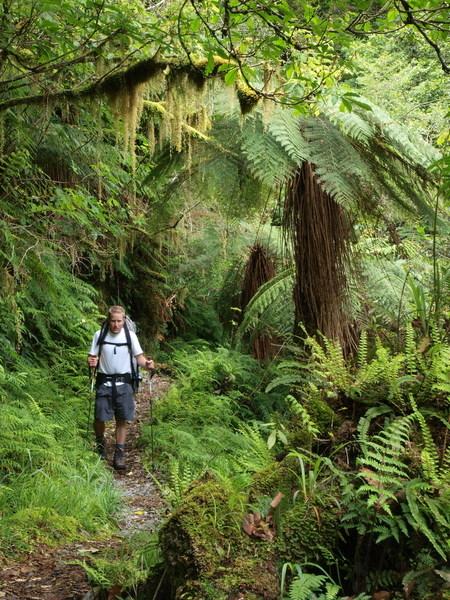 Copeland Track rainforest