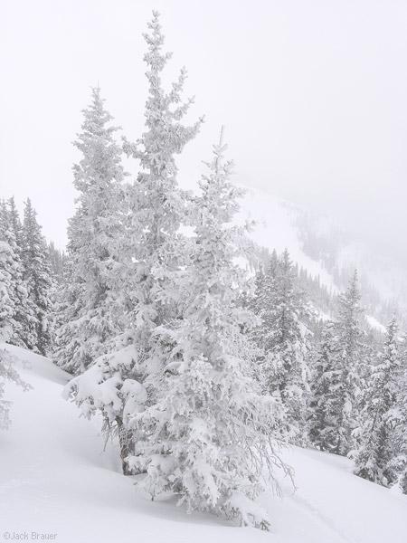 Snow smothered tree