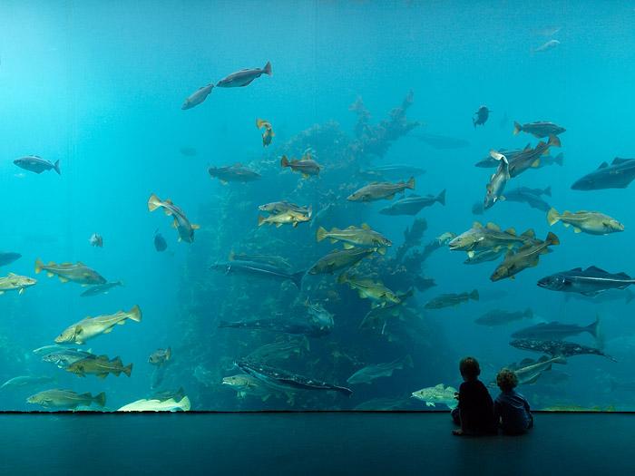 Aquarium in Ålesund