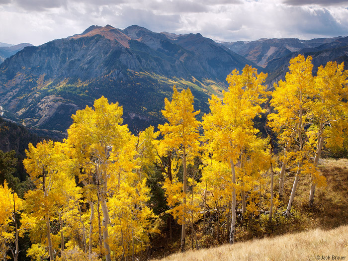 Aspens over Ouray