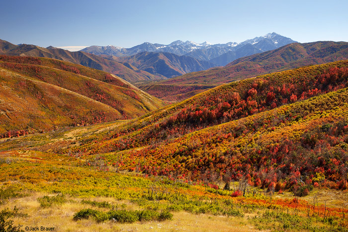 Autumn colors in the Wasatch Range, Utah