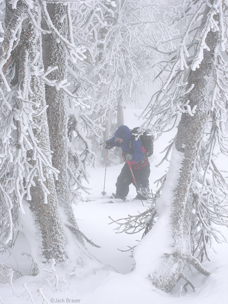 Splitboarding through frosted trees