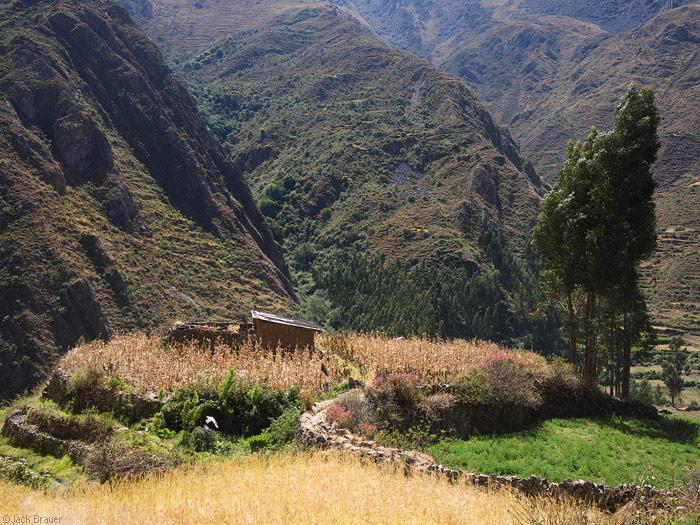 Llamac farm
