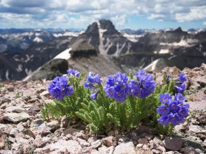 summit flowers