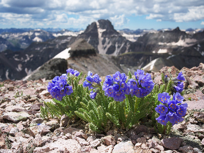 summit flowers