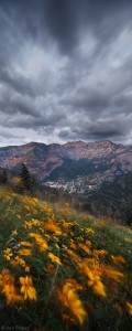 Ouray, flowers, and clouds