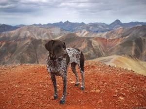 dog on summit