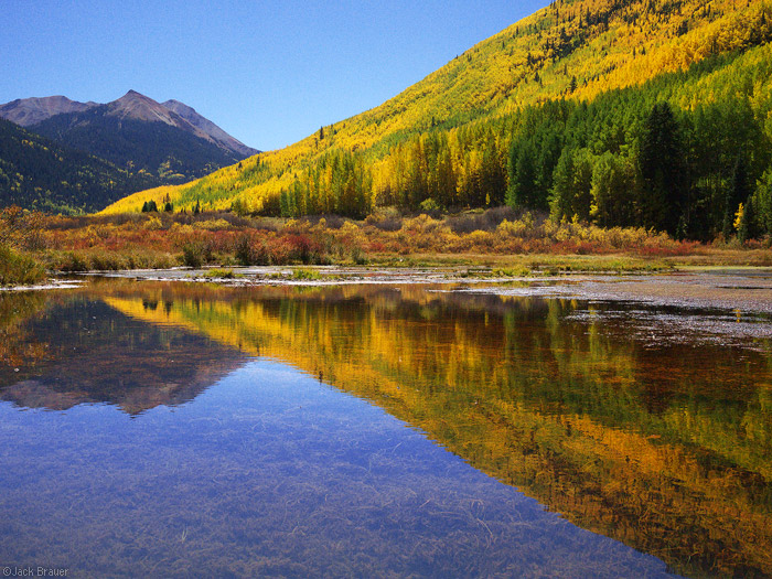 Aspen reflection near Red Mountain Pass, Colorado