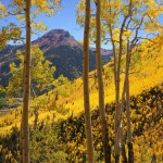 Golden aspens on Red Mountain Pass, San Juans, Colorado