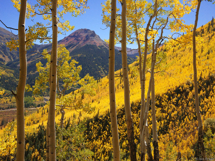 Golden aspens on Red Mountain Pass, San Juans, Colorado