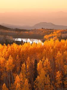 golden aspens on Grand Mesa, Colorado