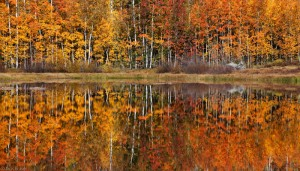 Colorful aspens reflected in a lake, Colorado