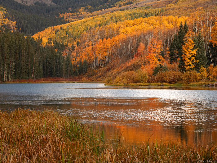 orange aspens at Woods Lake, Colorado