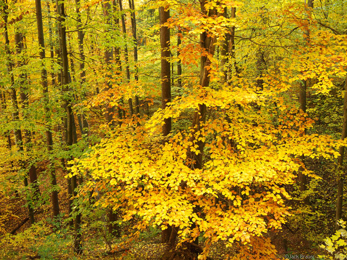 Autumn colors in Freiburg, Germany