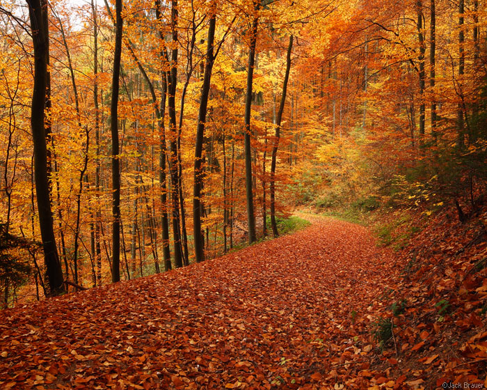 Autumn road in Freiburg, Germany