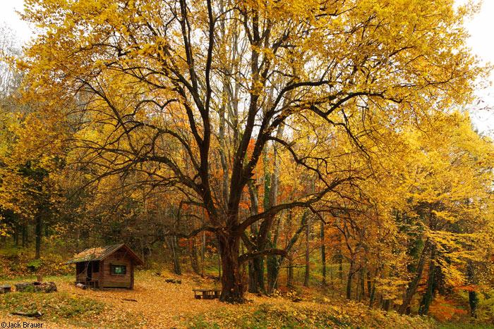 Autumn tree in Freiburg, Germany