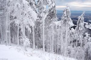 snowy Schauinsland, Black Forest, Germany