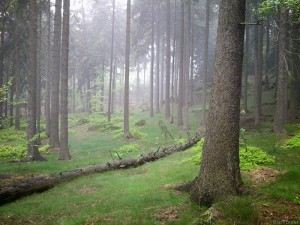 Foggy forest in Elbsandstein mountains, Germany