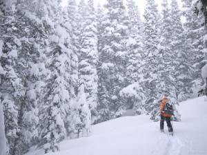 Skinning through snowy trees, Colorado