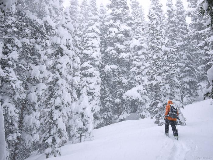 Skinning through snowy trees, Colorado