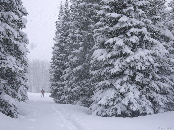 Snowy trees, Colorado