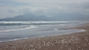 Beach at La Serena, Chile