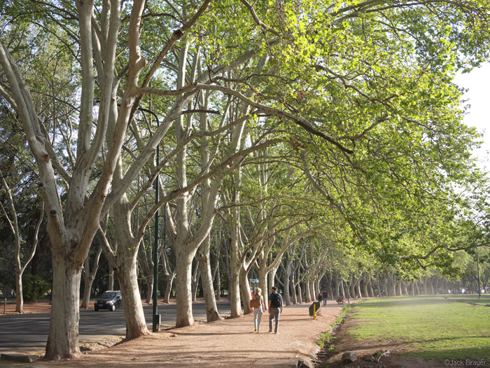 Trees in Mendoza, Argentina