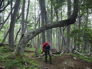 hiking through lenga forest, Chile