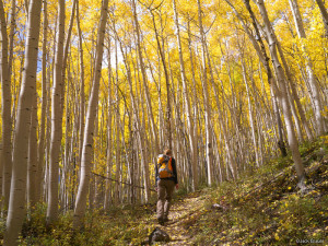 Hiking in the Aspens, Colorado