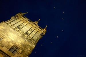 Birds over Prague