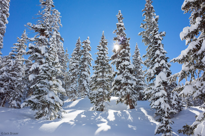 Snowy Trees, Colorado